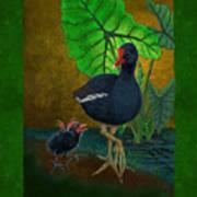 Hawaiian Moorhen Or Gallinule Art Print