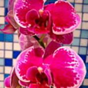 Hawaiian Orchid 1 Art Print