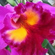 Hawaiian Orchid 2 Art Print