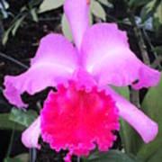 Hawaiian Orchid 33 Art Print