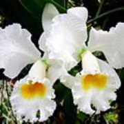 Hawaiian Orchid 35 Art Print