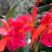 Hawaiian Orchid 37 Art Print