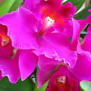 Hawaiian Orchid 8 Art Print