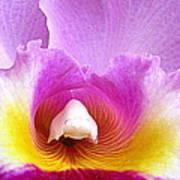 Hawaiian Orchid 9 Art Print