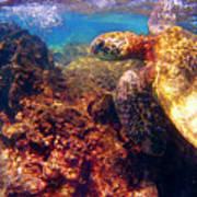 Hawaiian Sea Turtle - On The Reef Art Print