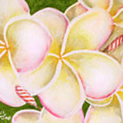 Hawaiian Tropical Plumeria Flower #483 Art Print
