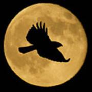 Hawk Flying By Full Moon Art Print