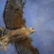 Hawk In Flight Art Print