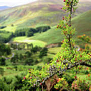 Hawthorn Branch With View To Wicklow Hills. Ireland Art Print