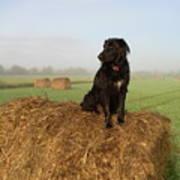 Hay There Black Dog Art Print