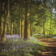 Hay Wood Bluebells 3 Art Print