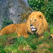 He Lion Art Print