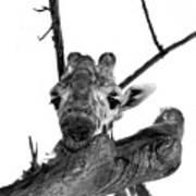 Head In The Trees Art Print