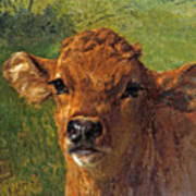 Head Of A Calf Art Print