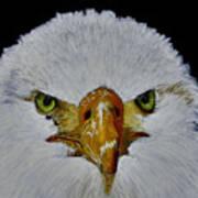 Head Of An Eagle  Art Print