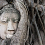 Head Of Buddha Statue In The Tree Roots Art Print