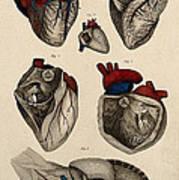 Heart, Anatomical Illustration, 1822 Art Print
