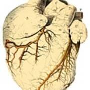 Heart Anatomy, 18th Century Art Print by
