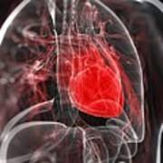 Heart Anatomy, Artwork Art Print by Sciepro
