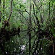 Heart Of The Swamp Art Print