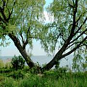 Heart Tree On Lake Saint Clair Art Print