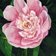 Heirloom Beauty Art Print