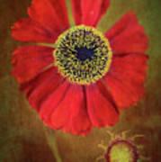 Helenium Beauty Art Print