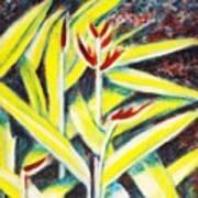Heliconia 2 Art Print