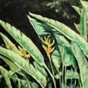 Heliconia Flower 7 Art Print