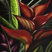 Heliconia Flower Art Print