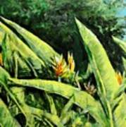 Heliconia Flowers 6 Art Print