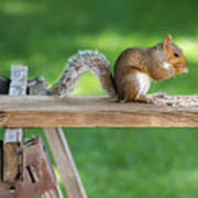 Hello Are You Gonna Eat All That? Chipmunk And Squirrel Art Print