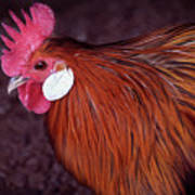 Hen Chicken, Digital Paint Art Print