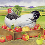 Hen In A Box Of Apples Art Print by EB Watts