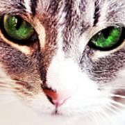 Her Emerald Eyes. Kitty Time Art Print