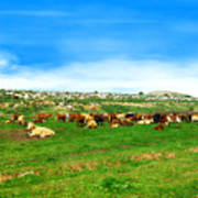 Herd Of Cows Under A Blue Sky In Green Hills Art Print