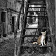 Here Kitty Kitty Kitty... Art Print by Evelina Kremsdorf