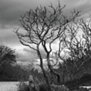 Hermit Island Tree 0912 Art Print