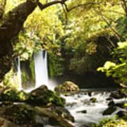 Hermon Stream Nature Reserve Banias Art Print