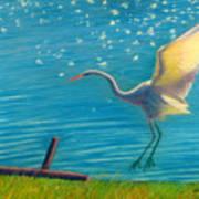 Heron Great White   Pastel   Art Print