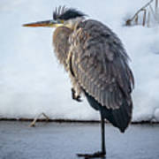Heron On Ice Art Print