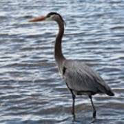 Heron On  Lake Guntersville Art Print