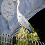 Heron Show Off Art Print