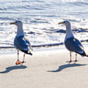 Herring Gulls On The Beach Art Print