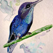 hHUMMINGBIRD 2   Art Print
