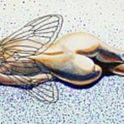 Hibernation Art Print