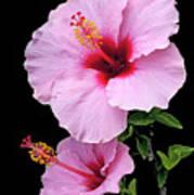 Hibiscus 7 V1 Art Print