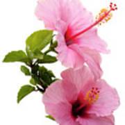 Hibiscus 7 V3 Art Print
