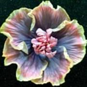 Hibiscus 9 Art Print