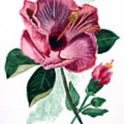 Hibiscus Dusky Rose Art Print